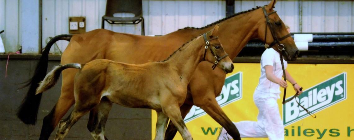 Meridian Sport Horses